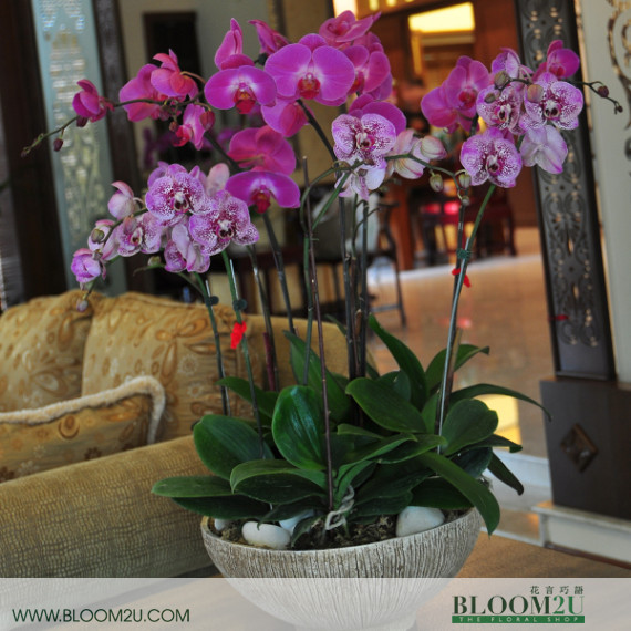 Orchids Arrangment