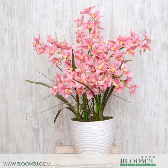 red cymbidium orchid