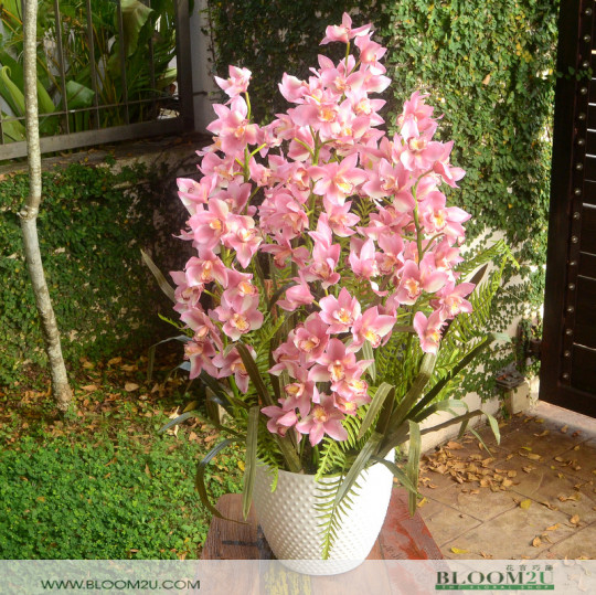 Pink Cymbidium Orchid Delivery