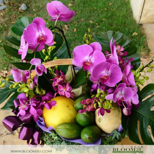 Phalaenopsis Orchid Basket