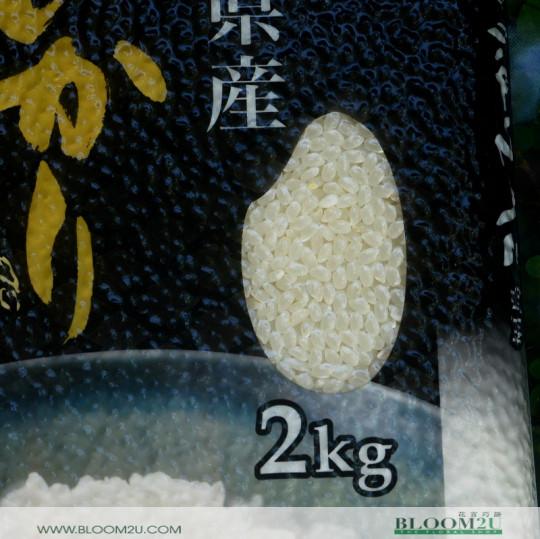 Round And Short Japanese Rice