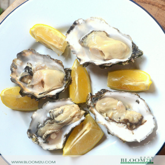 US Live Pacific Oyster
