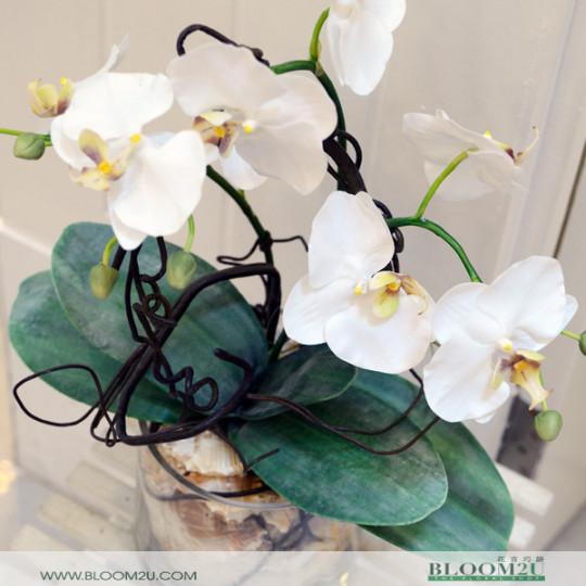 Orchids Arrangement
