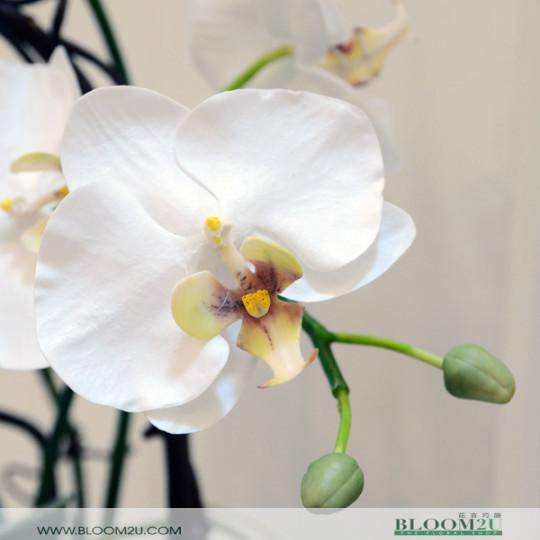 Modern Orchid Arrangement