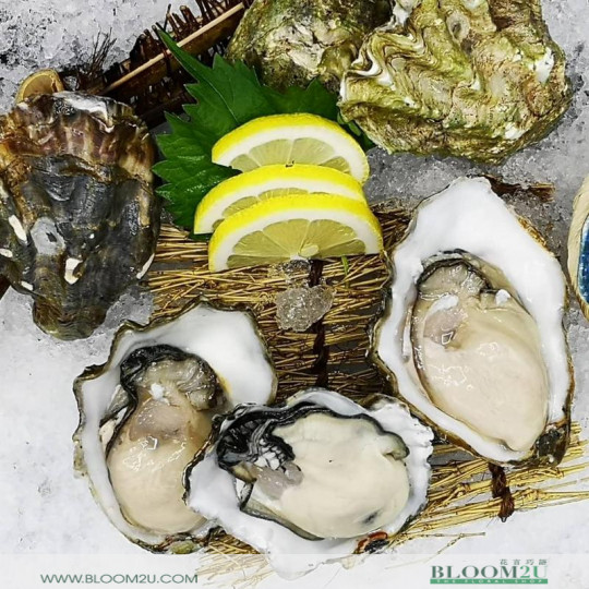 US Pacific Live Oyster