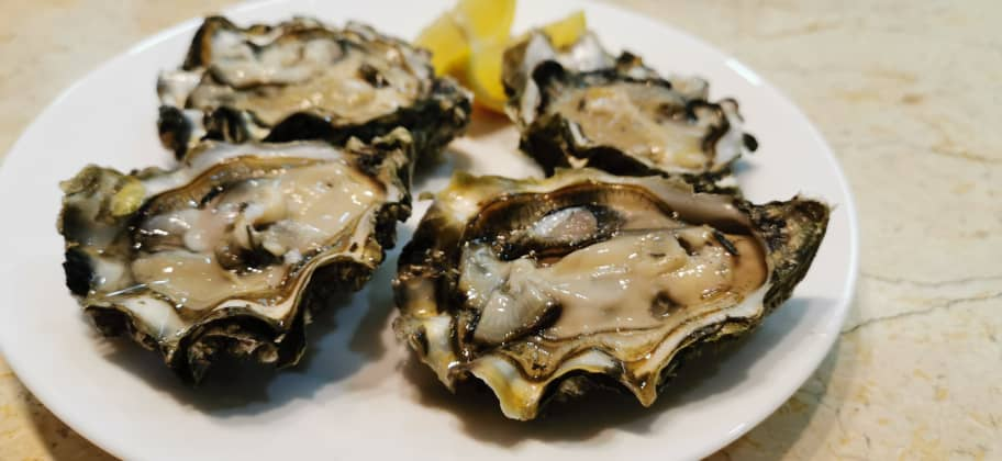 US Live Oyster